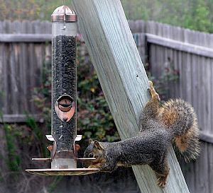 My kind of squirrel!